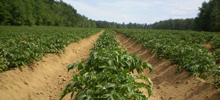 Revolutionising Indian Agriculture through Israeli