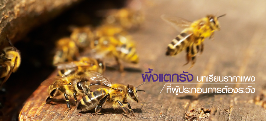 ผึ้งแตกรัง...บทเรียนราคาแพงที่ผู้ประกอบการต้องระวัง