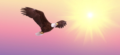 Fix your business problems the eagle way