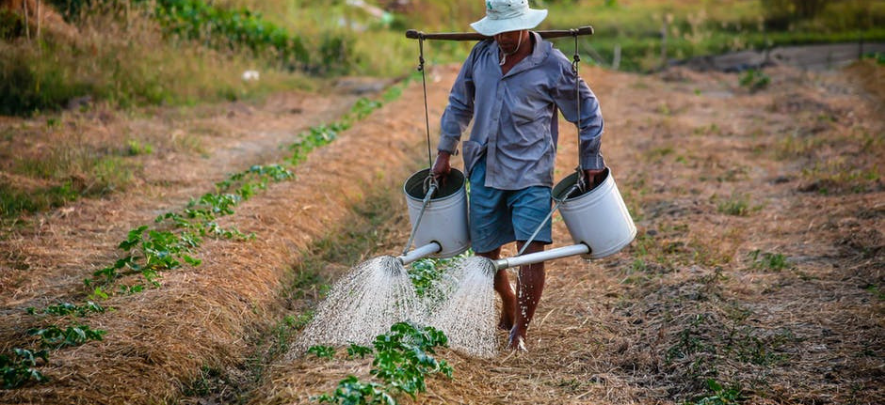 How to start an agricultural business in the Philippines