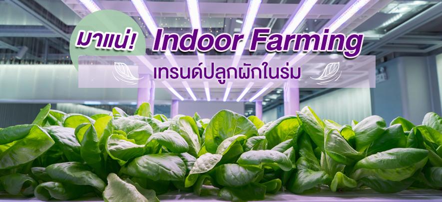 มาแน่! Indoor Farming เทรนด์ปลูกผักในร่ม